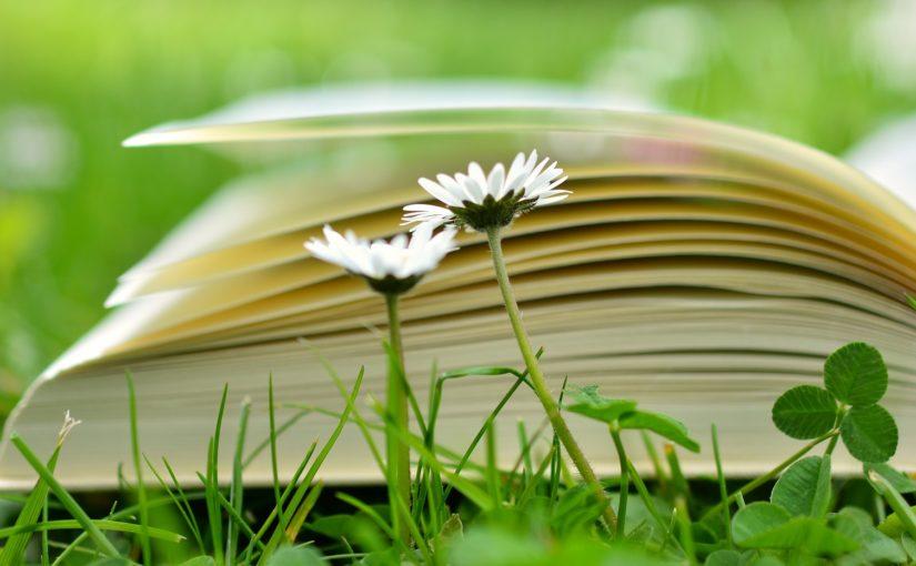 NaNoWriMo – National Novel Writing Month