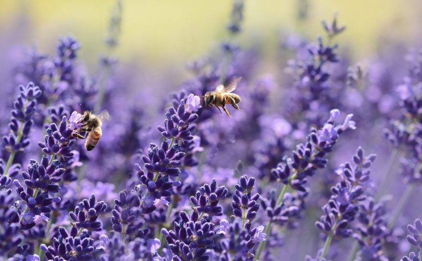 Just Let Me Bee: On Finding Your Creative Niche